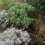 orto botanico Pio X di Tavo